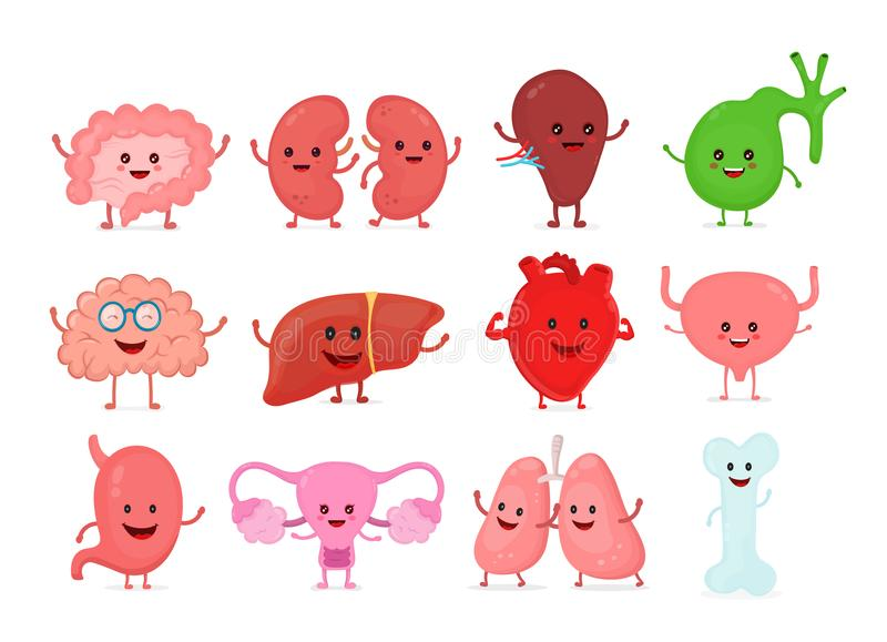 Cute smiling happy human healthy strong. Organs set. Vector cartoon character illustration icon design. Isolated on white background. Heart, liver, brain royalty free illustration