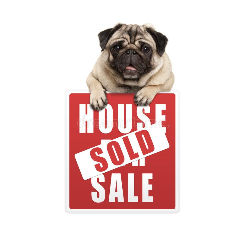 Cute smiling pug puppy dog hanging with paws on red house sold sign royalty free stock photography