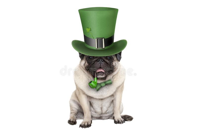 Cute smiling st patricks day pug puppy dog sitting down with green top hat and pipe stock photography