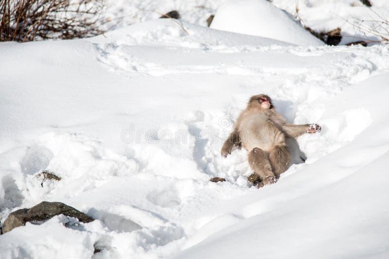 Snow Monkey at Jigokudani park. Cute Snow Monkey playing snow at Jigokudani park in Yudanaka town , Nagano , Japan stock images