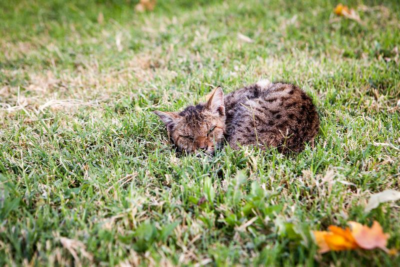 Cute spotted kitten stock images