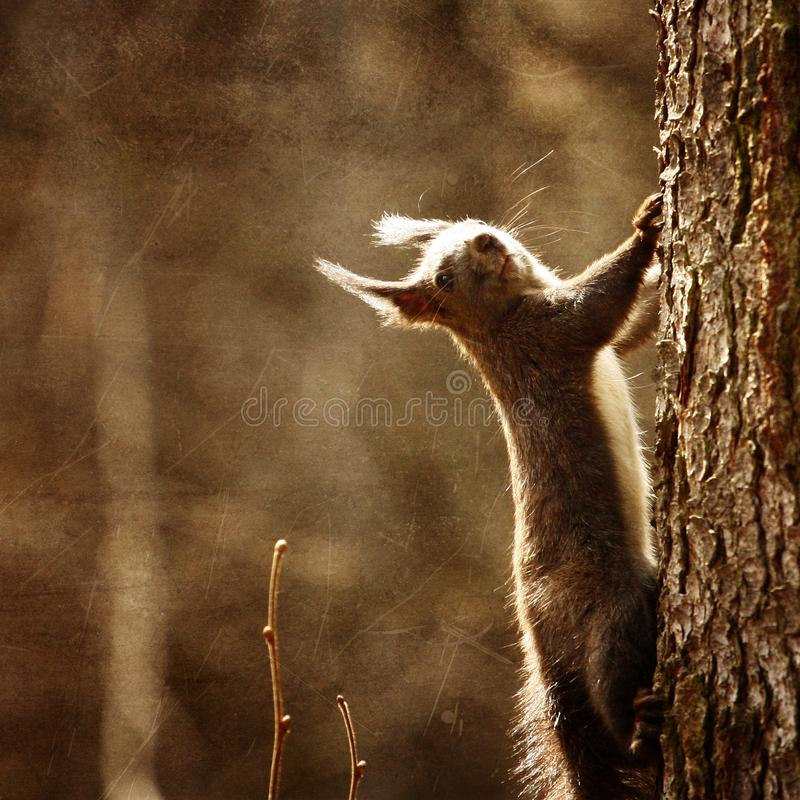 Download Cute squirrel stock photo. Image of fury, wildlife, wood - 13973754