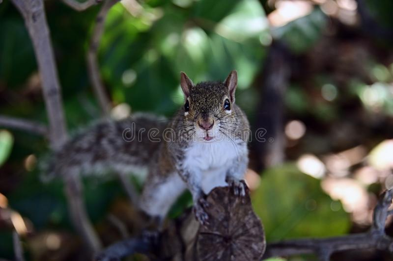Close up of a squirrel on a tree branch. stock photo