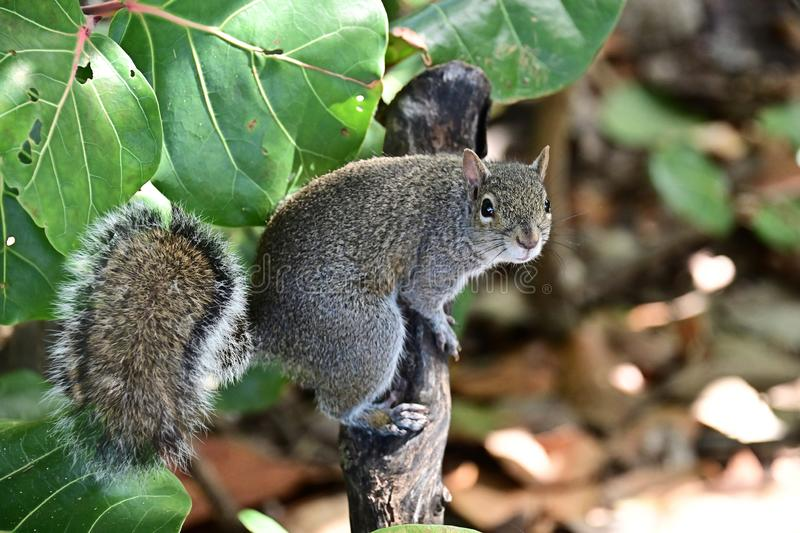 Cute squirrel on a tree branch stock photo