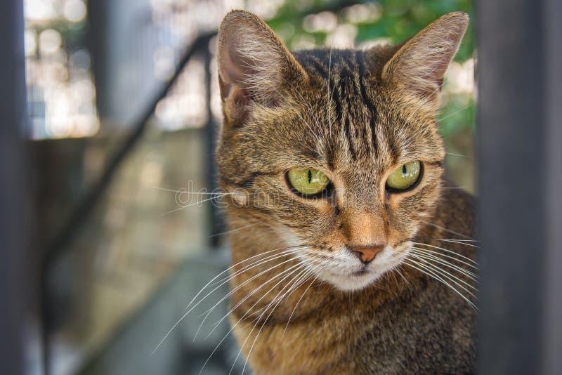 Cute stray cat in the backyard. Cute stray cat posing in the backyard royalty free stock photos