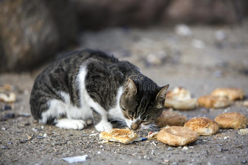 The cute stray cat Turkey Izmir. Hungry cat royalty free stock photo