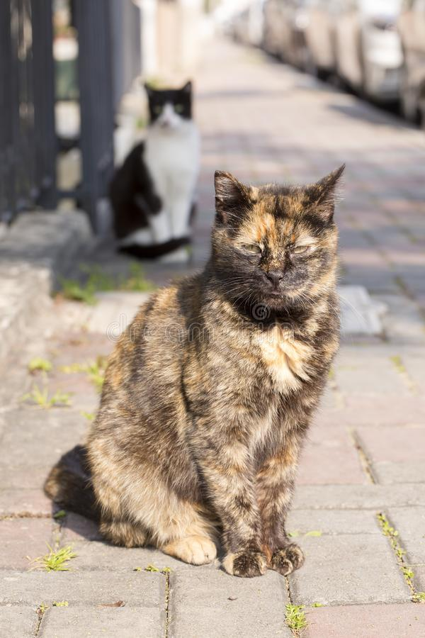 The cute stray cat Turkey Izmir. Street cat stock photos