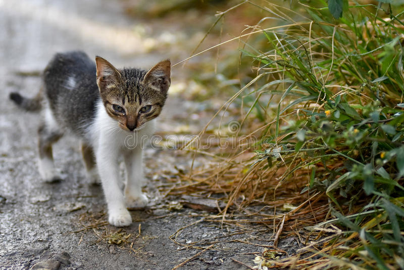 Cute stray kitten. Cat on mud path next to tall grass verge with depth of field and room for text stock images