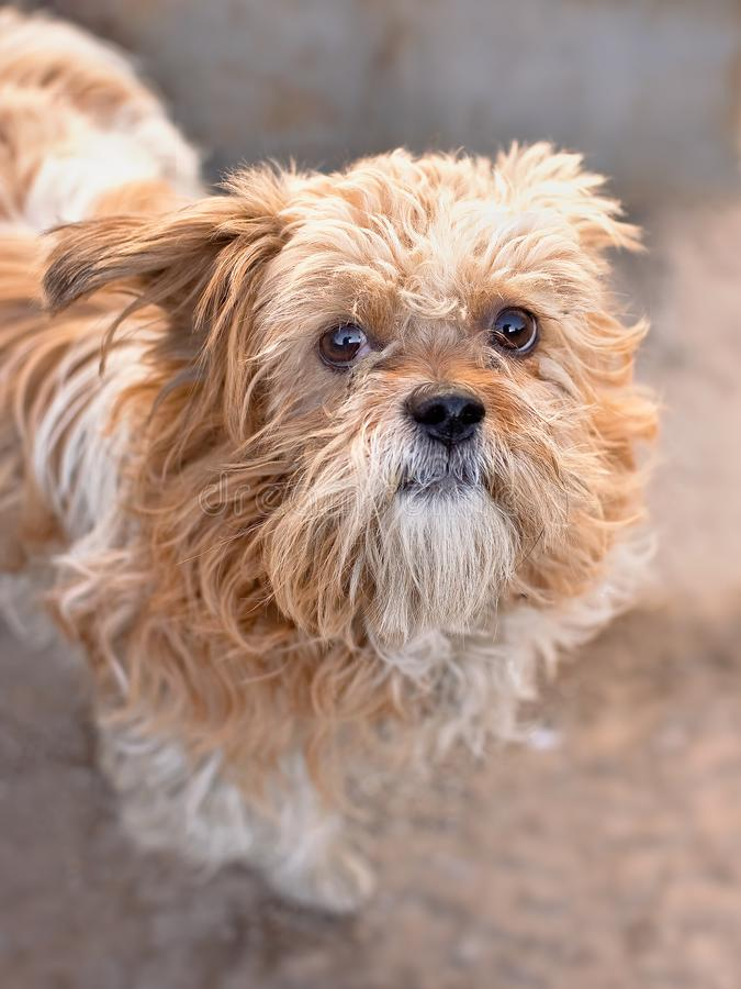 Cute street dog looks up, Beijing, China royalty free stock photography