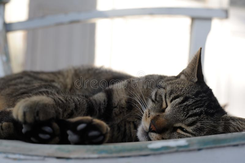 A cute striped cat lying on a chair and playing on a warm afternoon stock images