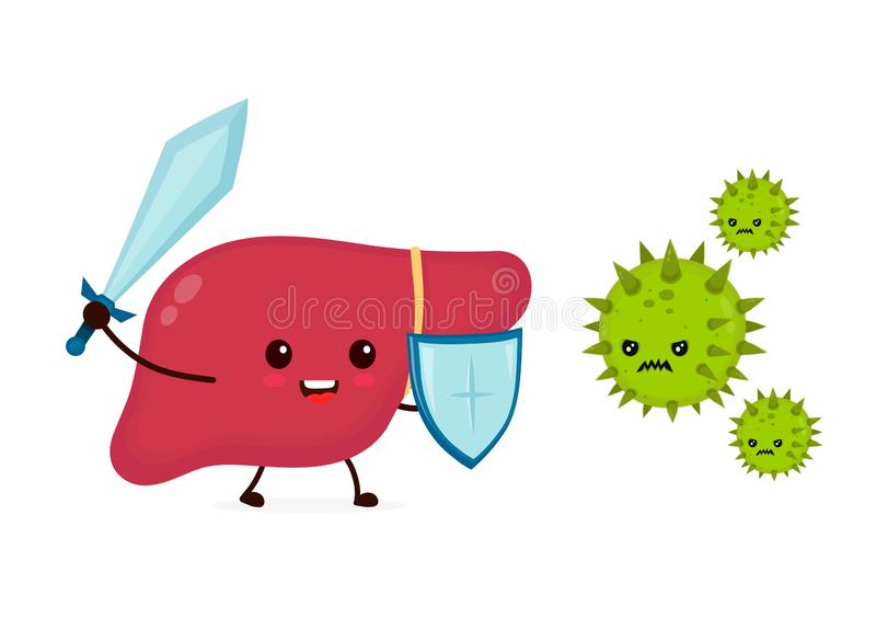 Cute strong happy smiling healthy liver. With sword and shield fighting with virus. Vector flat cartoon character illustration icon design.Isolated on white royalty free illustration