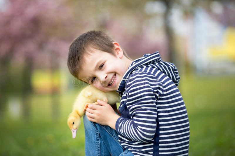 Cute sweet child, boy, playing in the park with ducklings stock photos