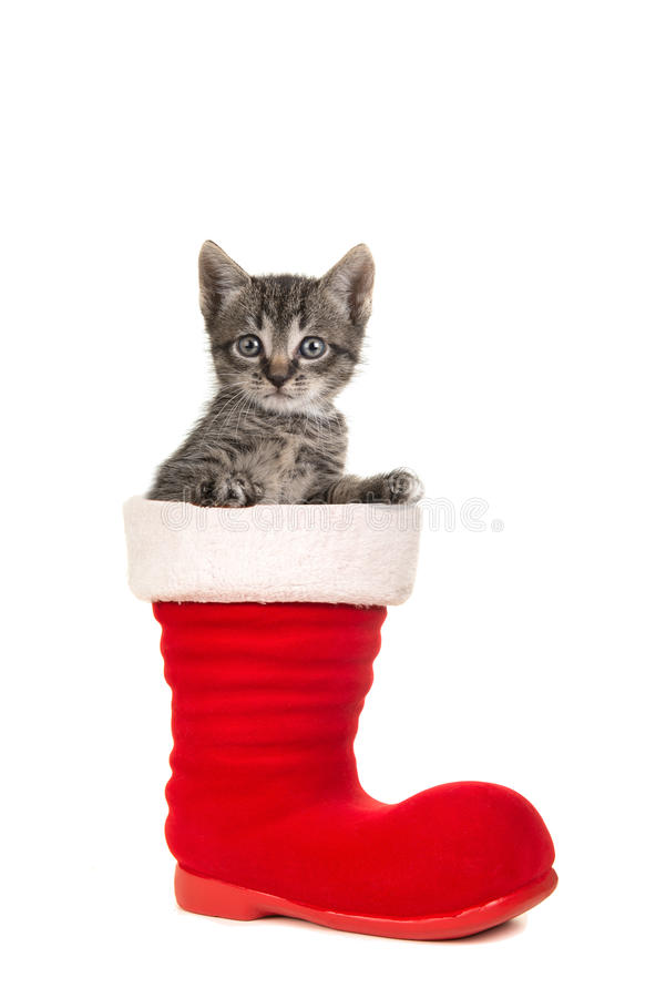 Cute tabby baby cat sitting in santa`s boot. Cute tabby baby cat facing the camera sitting in santa`s boot on a white background royalty free stock photos