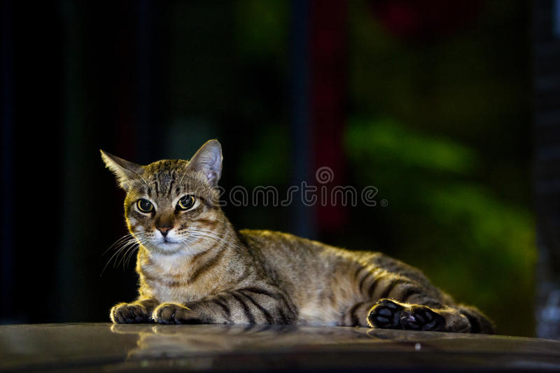 Download Cute tabby cat stock image. Image of outside, adorable - 20587487