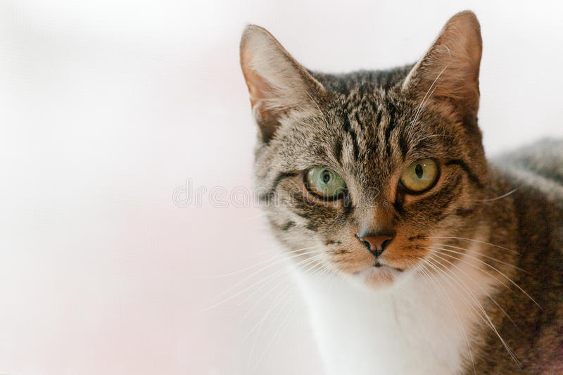 Download Cute Tabby Cat With Green Eyes Stock Image - Image of eyes, brown: 27413811