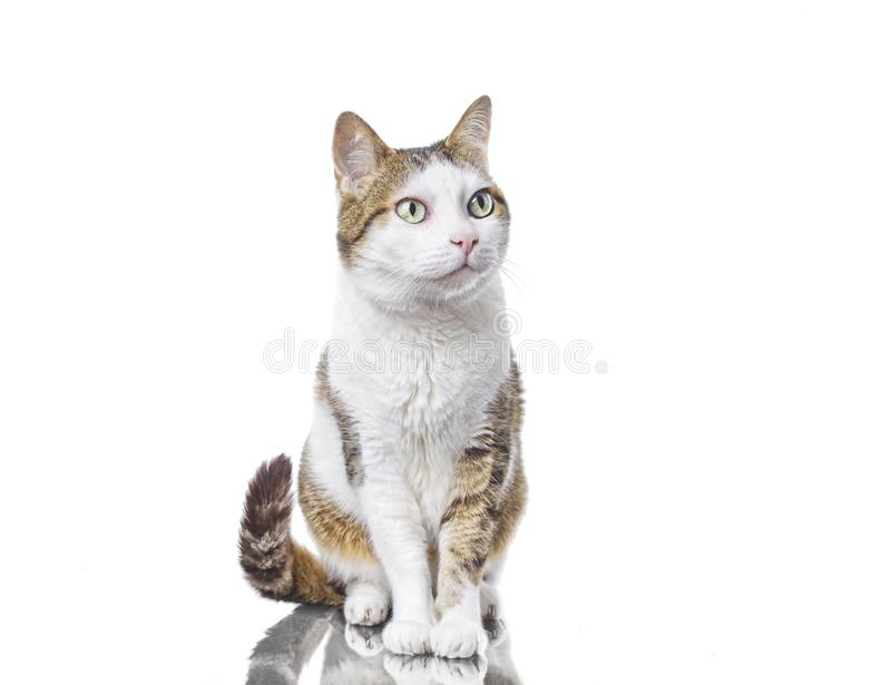 Cute tabby cat looking curious sideways. Isolated on white vector illustration