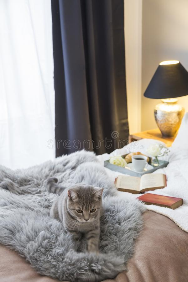 Cat Lying By Open Book On Bed By Glowing Lamp. Cute tabby cat looking up while lying by open book on bed by glowing lamp at home stock photos