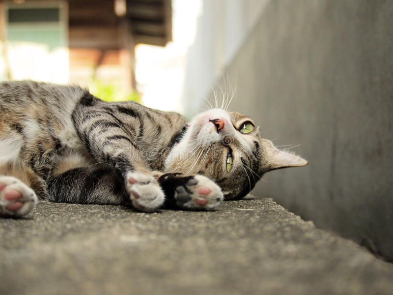 Cute tabby cat lying on the floor. And staring to something royalty free stock photography