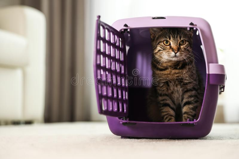 Cute tabby cat in pet carrier stock photo