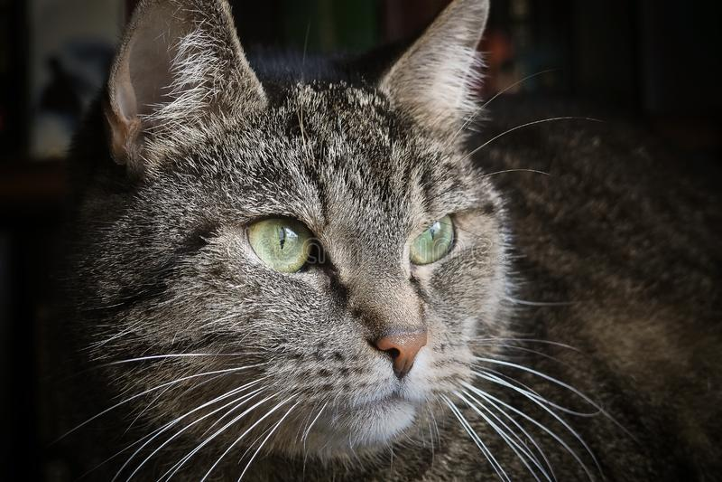 Cute tabby cat stock photo