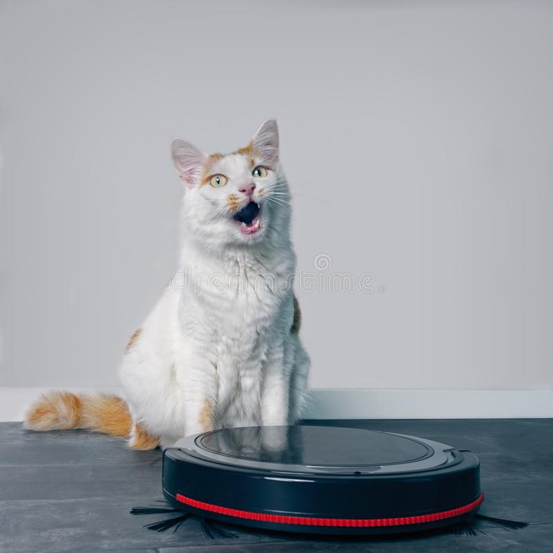 Cute tabby cat sitting behind a robot vacuum cleaner. royalty free stock photography