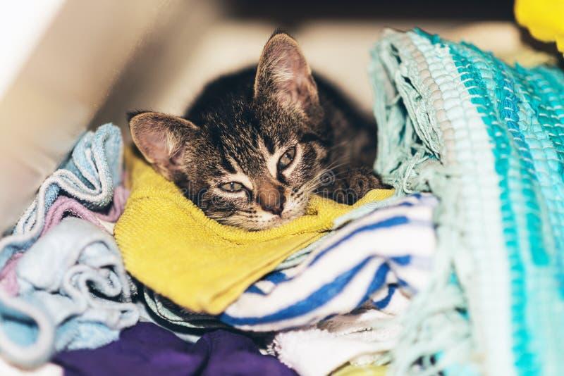 Cute tabby kitten asleep in the laundry stock photography