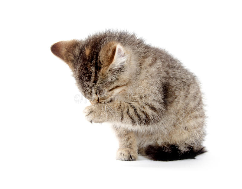 Cute tabby kitten stock photography