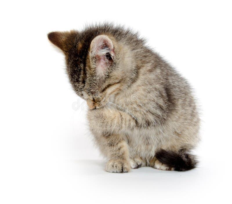 Cute tabby kitten royalty free stock photo