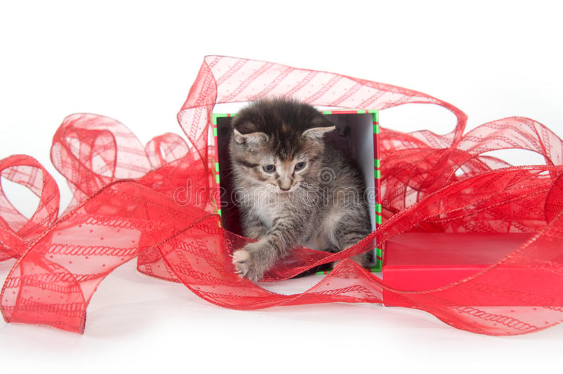 Cute Tabby Kitten In Gift Box Royalty Free Stock Photos