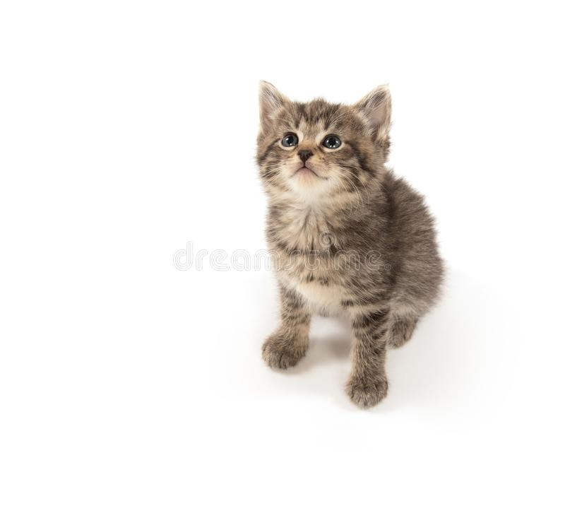 Cute tabby kitten looking up stock photography