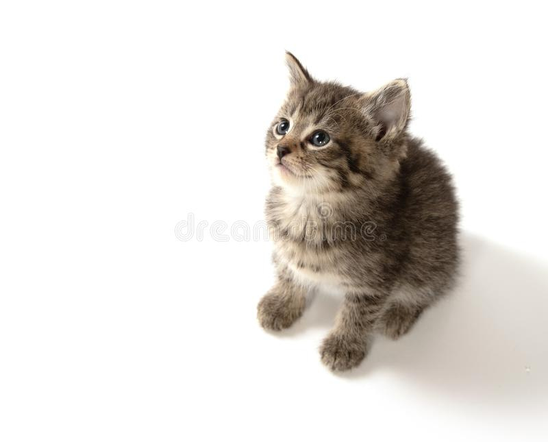 Cute tabby kitten looking up royalty free stock photos