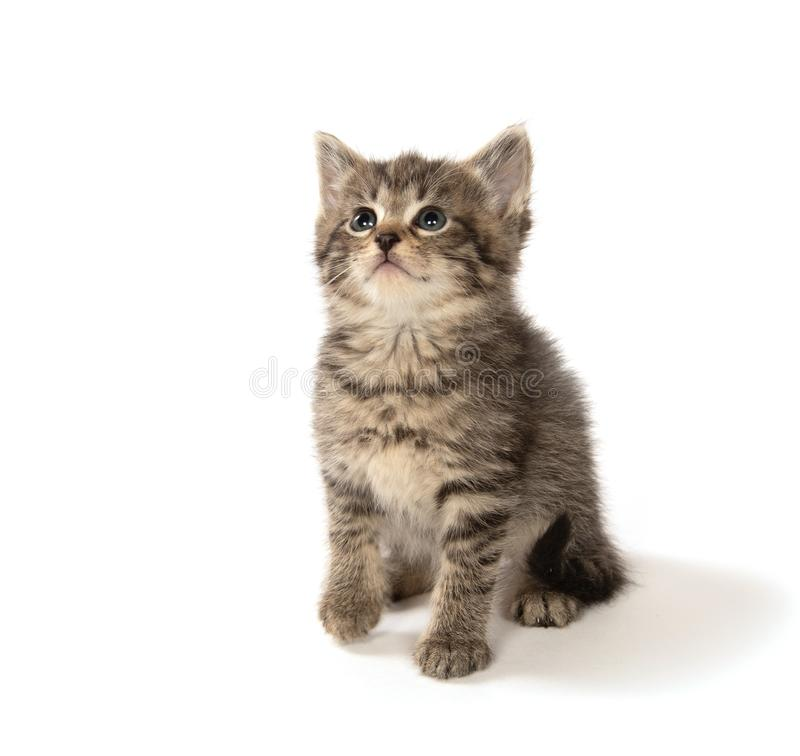 Cute tabby kitten looking up royalty free stock photography