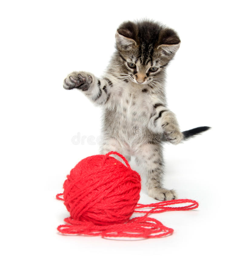 Cute Tabby Kitten Playing With Yarn Stock Image - Image ...