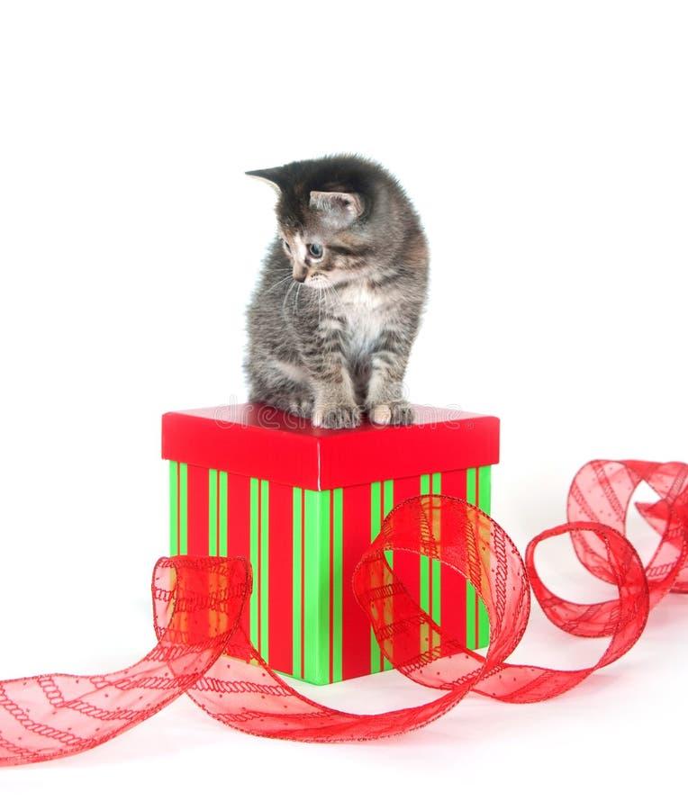 Cute tabby kitten sitting on gift box royalty free stock photo