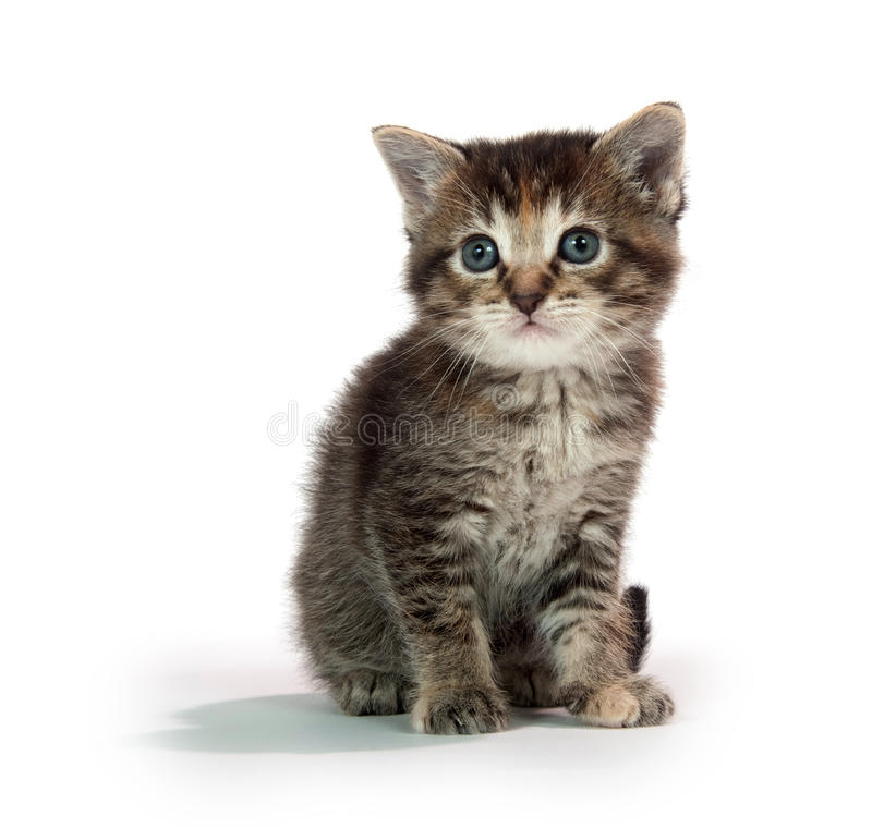 Cute tabby kitten sitting on whit royalty free stock photo