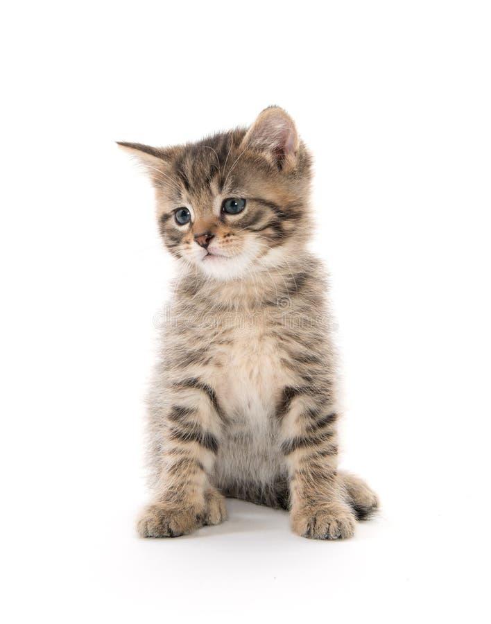 Cute tabby kitten sitting on white royalty free stock image