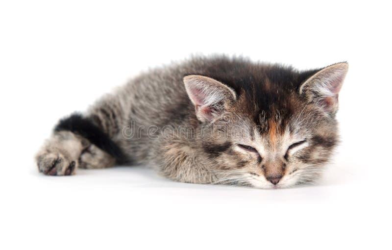 Cute tabby kitten sleeping stock photo