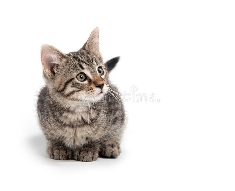 Cute tabby kitten on white background royalty free stock photo