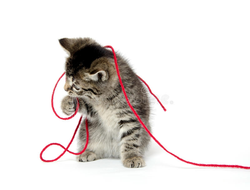 Download Cute Tabby Kitten With Yarn Stock Image - Image: 34252567