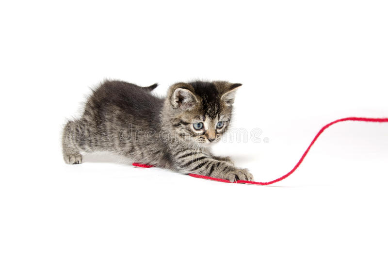 Download Cute Tabby Kitten With Yarn Stock Image - Image: 34252587