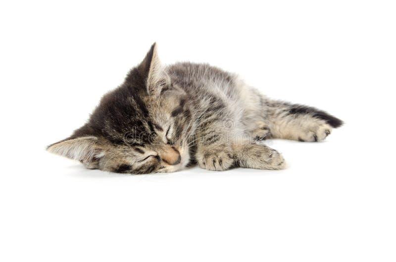 Cute tabby sleeping stock images