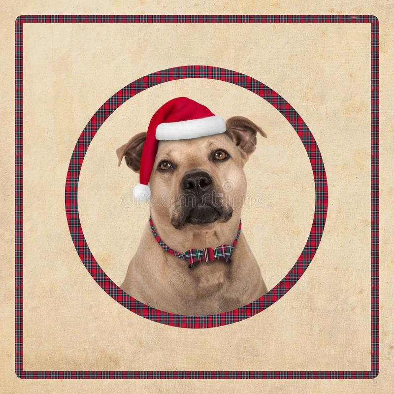 Cute terrier dog in circle with red plaid pattern, on old vintage paper background,. Christmas card design royalty free stock photos