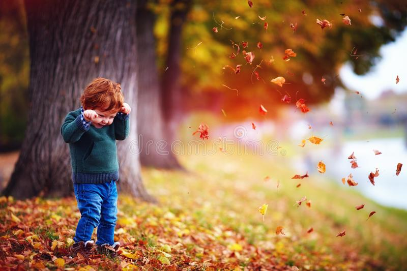 cute happy toddler baby boy playing in fallen leaves in autumn park royalty free stock photos