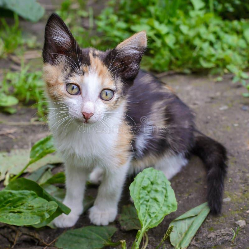 Cute tricolor kitten in the garden stock photos