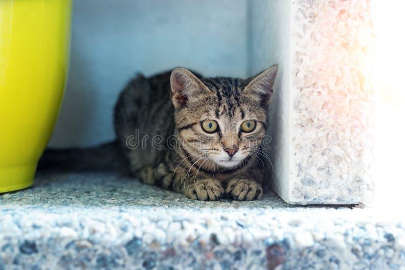 Cute, underbart, liten tabbe, kattunge som sitter i mörkt hörn medan man jagar eller stalar utomhus Snygg liten katt royaltyfri bild
