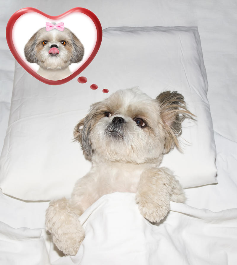 Cute Valentine Dog In Glasses With Heart Stock Image