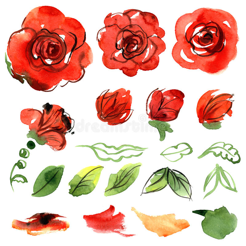Cute watercolor flowers. Roses. Elements vector illustration