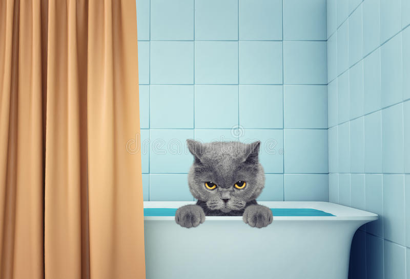 Cute wet cat in the bath royalty free stock photography