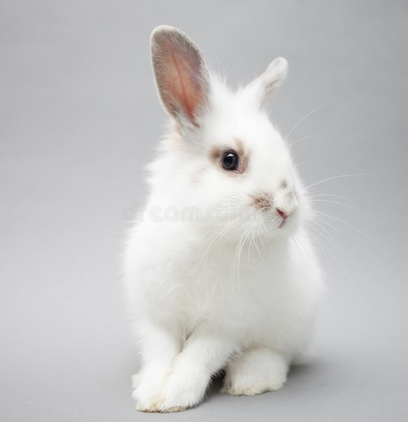 Cute white baby bunny rabbit on a seamless light background. Cute white baby bunny rabbit on a seamless white background royalty free stock images