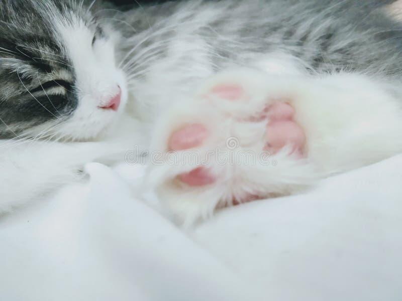 Cute white and beautiful kitty stock image